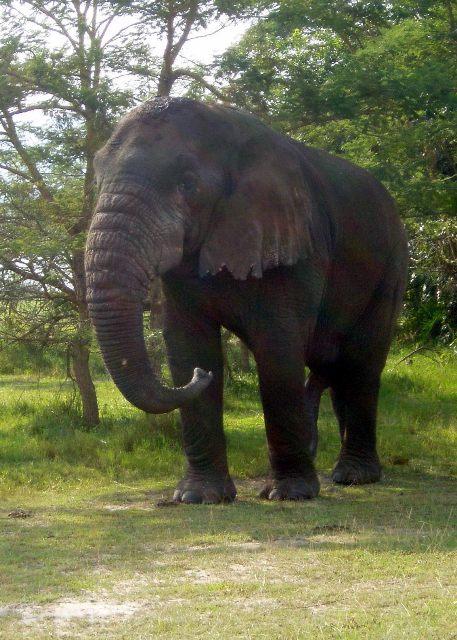 Auch einen alten Elephanten haben wir begegnet