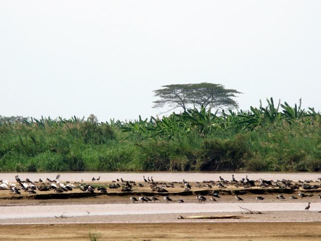 Auch Vögel aller Art bevölkern die Sandbänke, wenn diese von den Vierbeinern freigegeben werden.