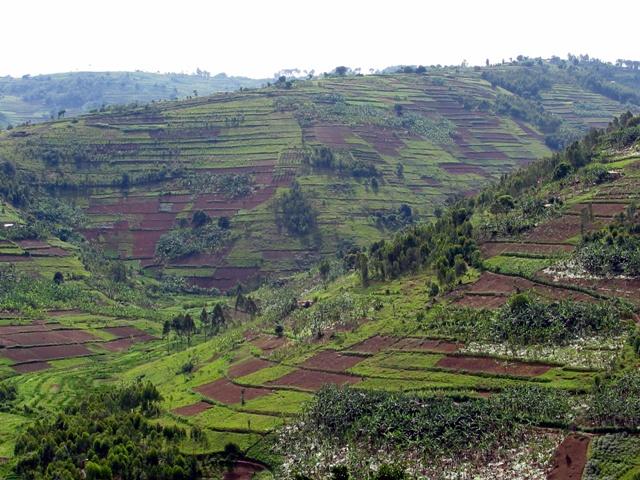 Einige der tausend Hügel im Land. Hier zwischen Kigali und Byumba.