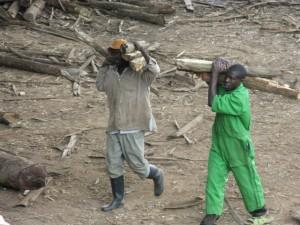 Holz wird in eigentlichen Transportketten zu den Öfen gebracht