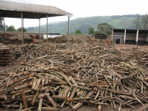 Hinter dem Fabrikationsgebäude hat es ein riesiges Holzlager für den Energiebedarf zu befriedigen