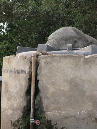 Als ich in der Nacht zwecks Erleichterung das Zelt verlassen habe, bin ich einem Elefanten auf ca. 2 m distanz begegnet.